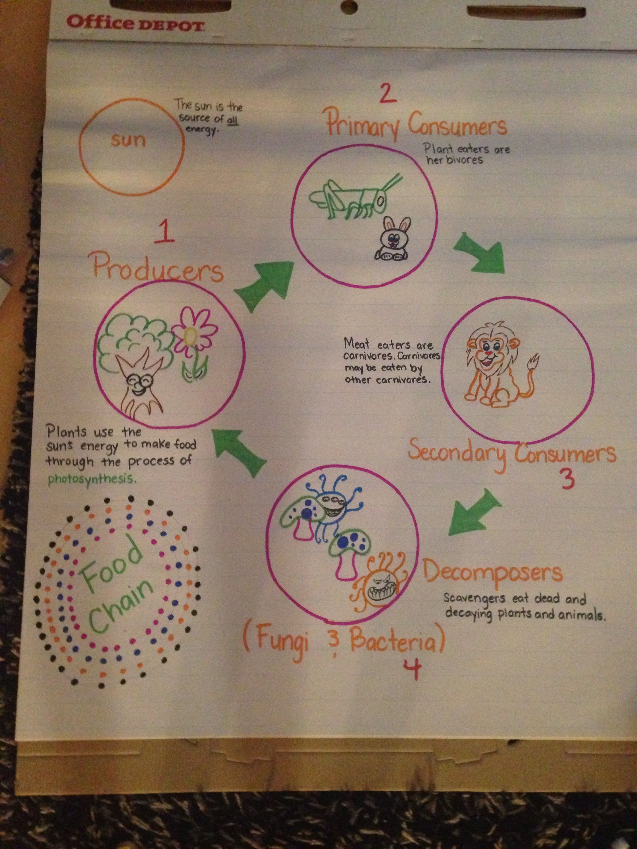 Food chain 4th grade Science anchor charts Pinterest