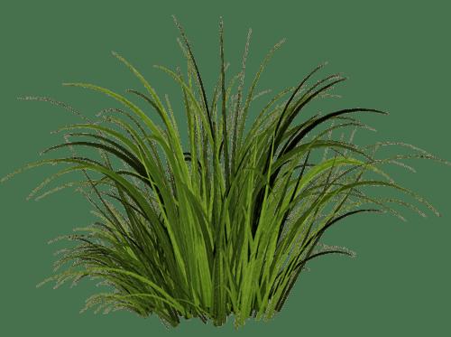 imagen, la hierba verde hierba imagen png PNG IMAGENES