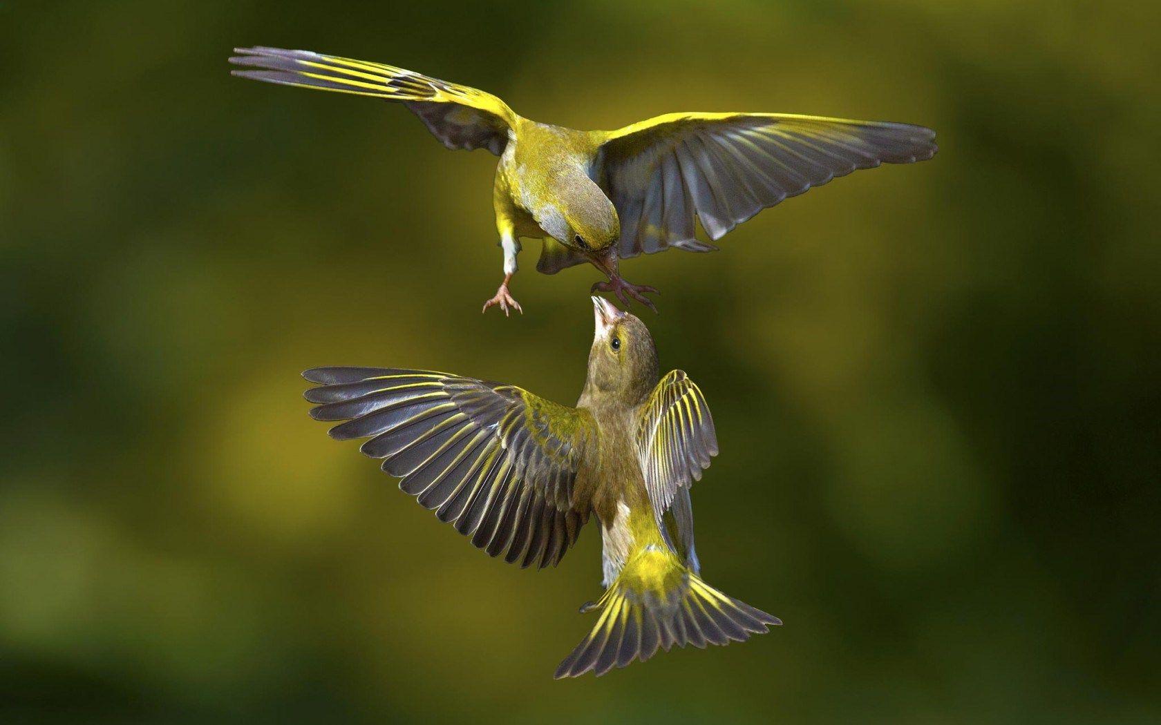 macro wallpaper | beautiful macro photography birds wallpaper