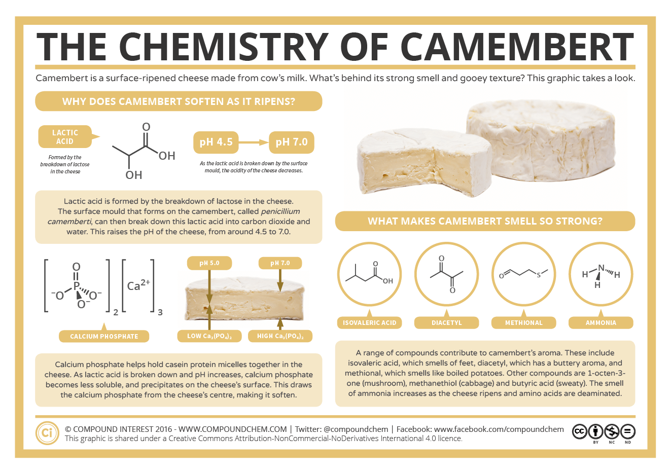 The Chemistry Of Camembert Cheese