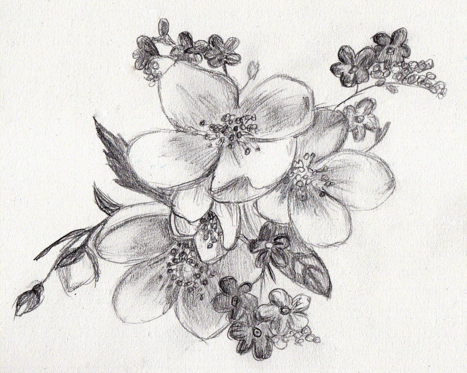 Easy Sketches Of Flowers Rainbow Smudge SKETCHES