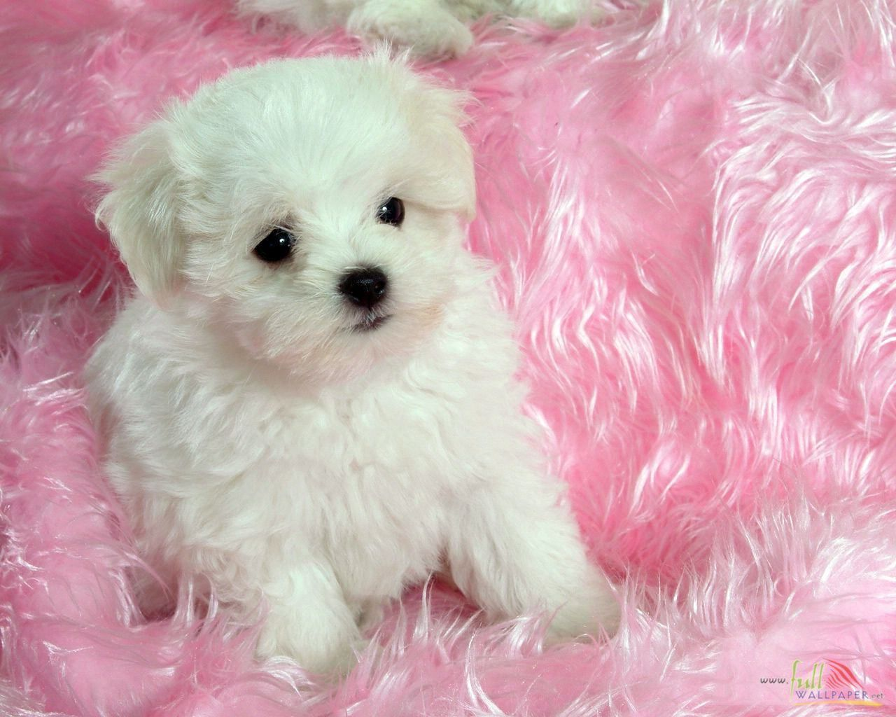 dog pictures White Baby Dog Free Wallpapers 15314