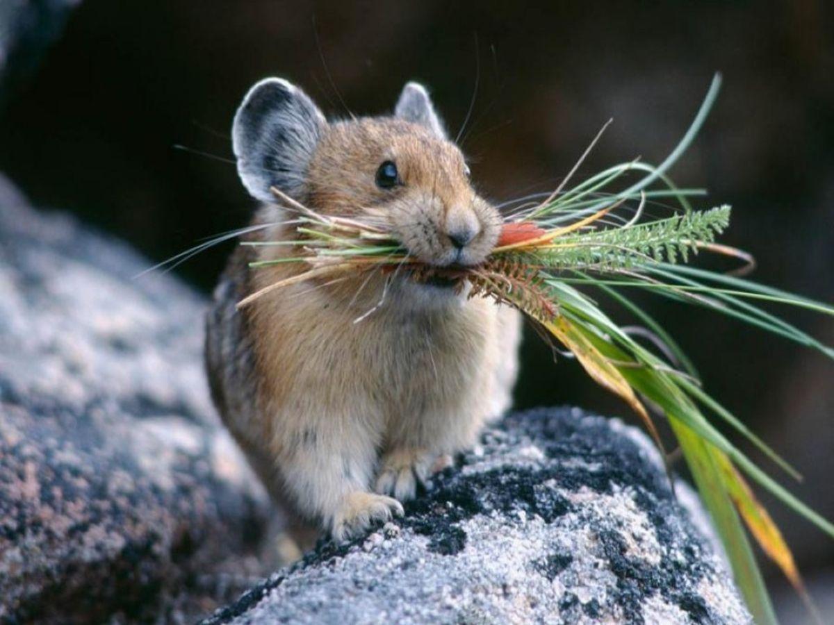 Bing Cute Animal Backgrounds Desktop Wallpapers