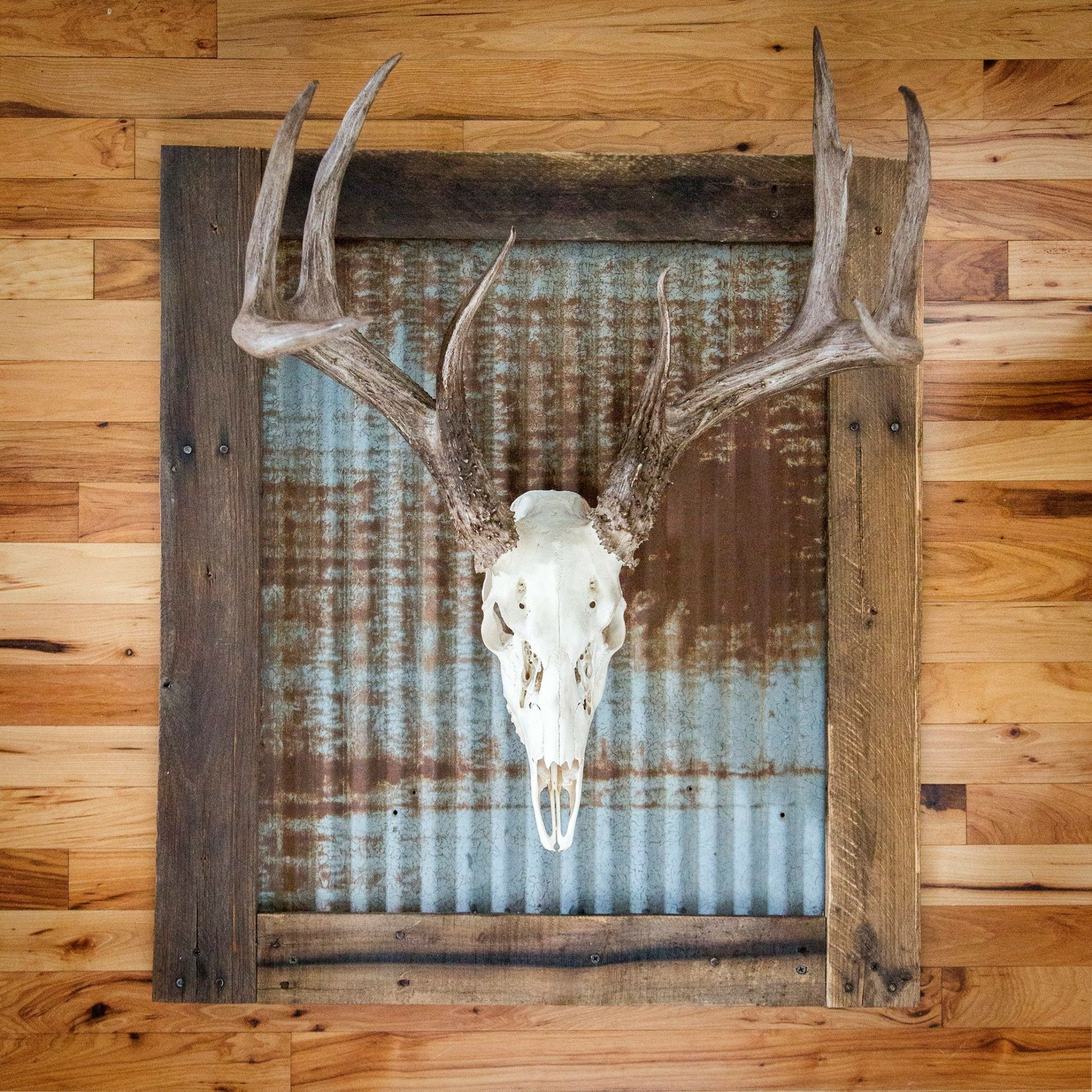 Whitened Skull With Rustic Tin Wall Frame Includes Wall