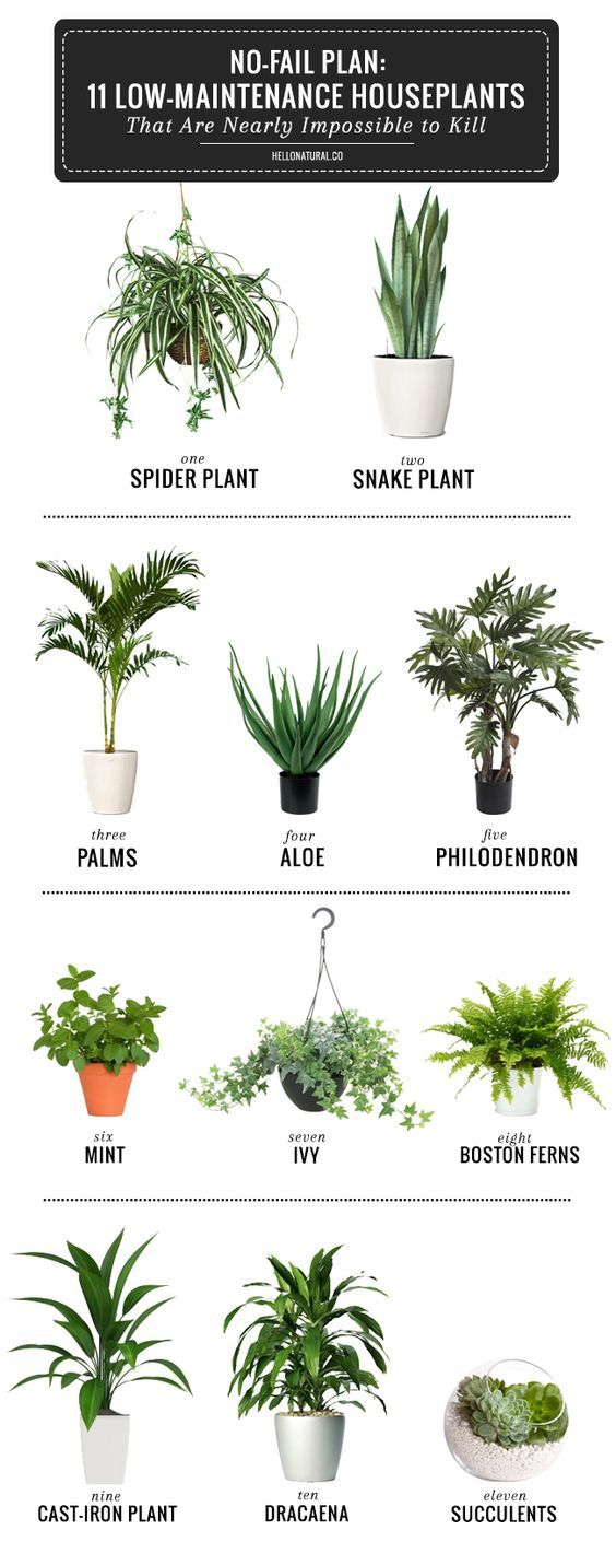 This infographic and blog break down the simplest plants to have in your house this spring! Now's the time to bring greenery