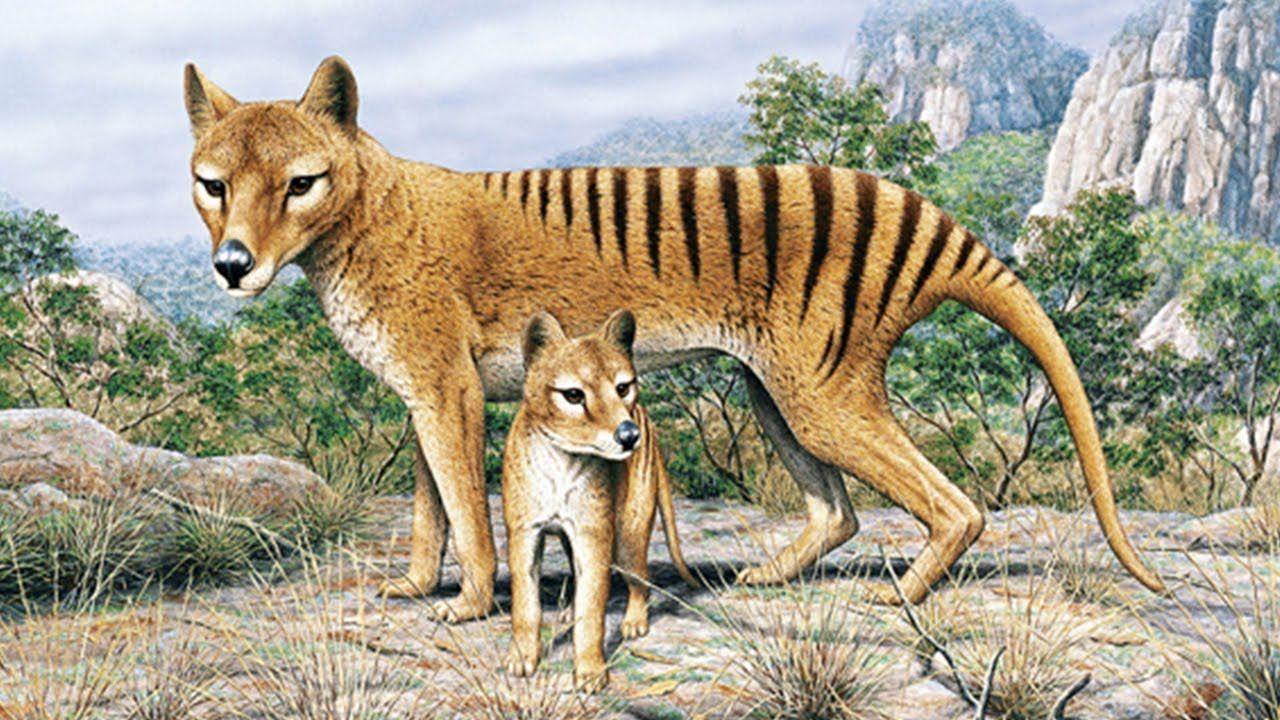 extinct animals found today 10 Extinct Animals Alleged
