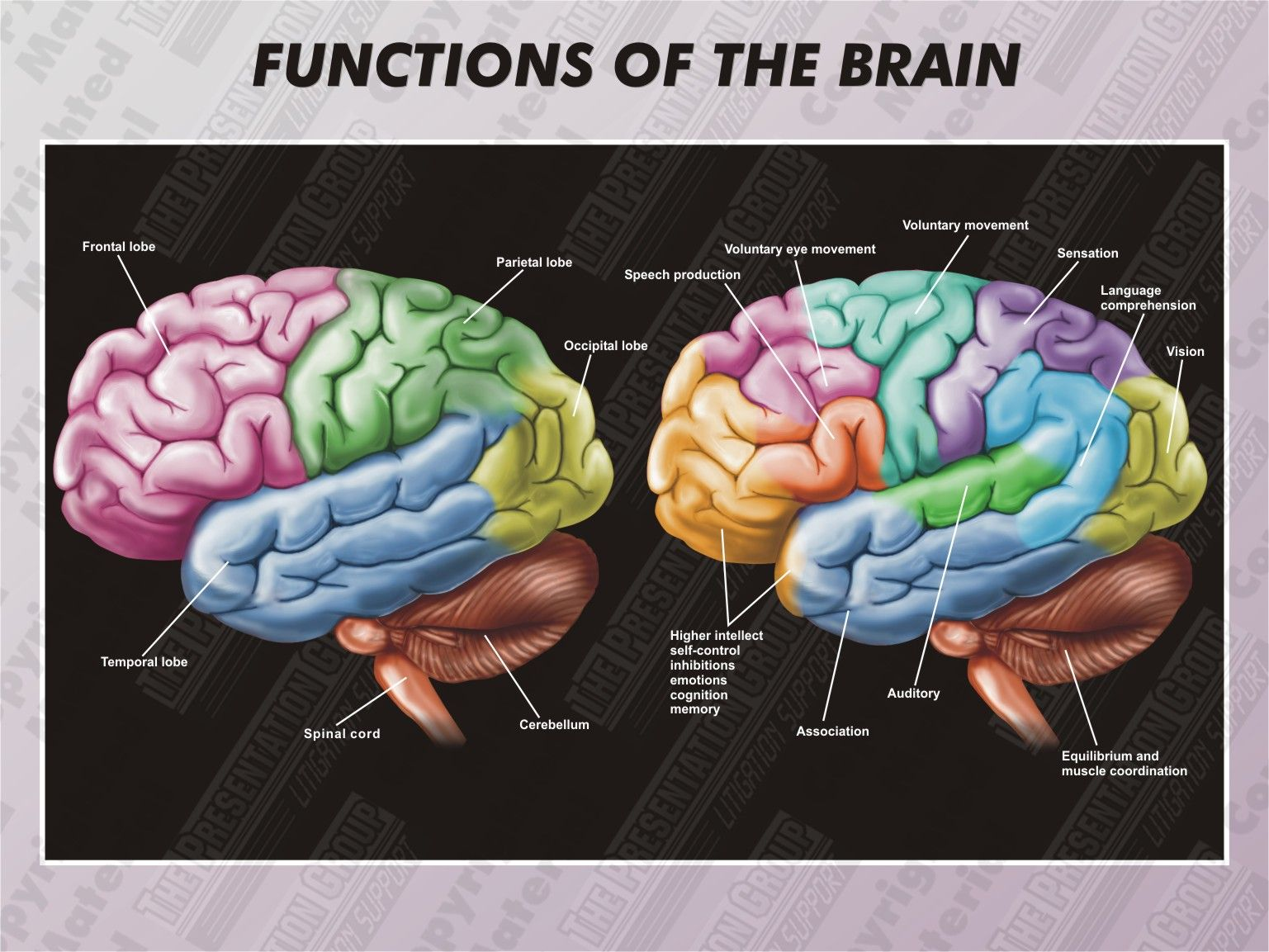1 Ha Functions Of The Brain