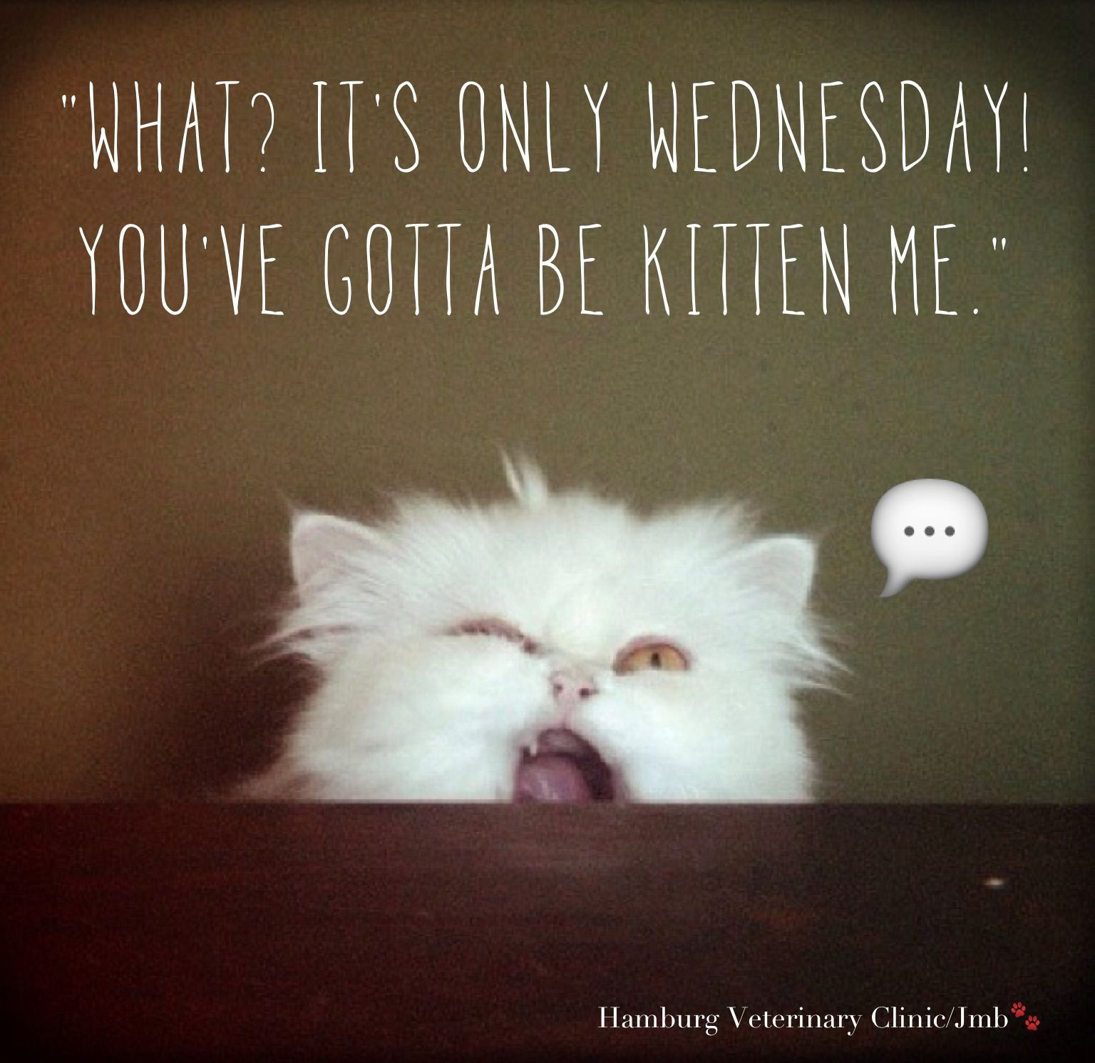 Wednesday funny Animal Humor What? It's only Wednesday