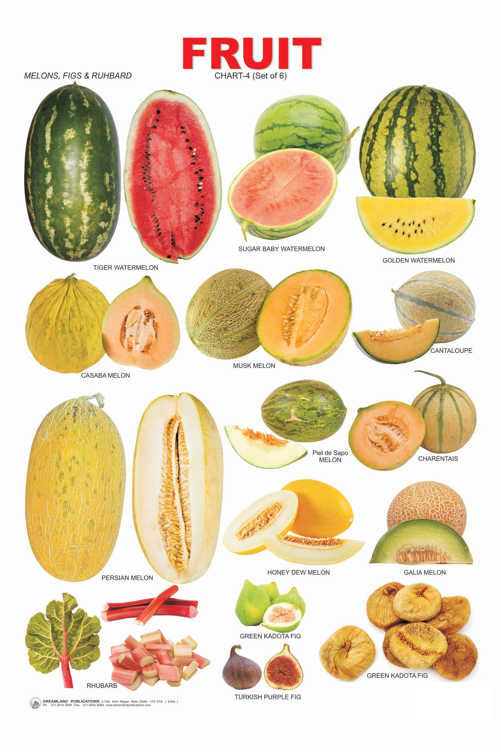 81097a.jpg (1600×2400) VEGETABLES AND FRUIT LIST NAMES