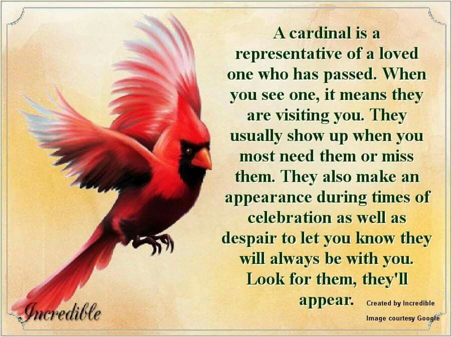 The Meaning Of A Cardinal Showing Up The