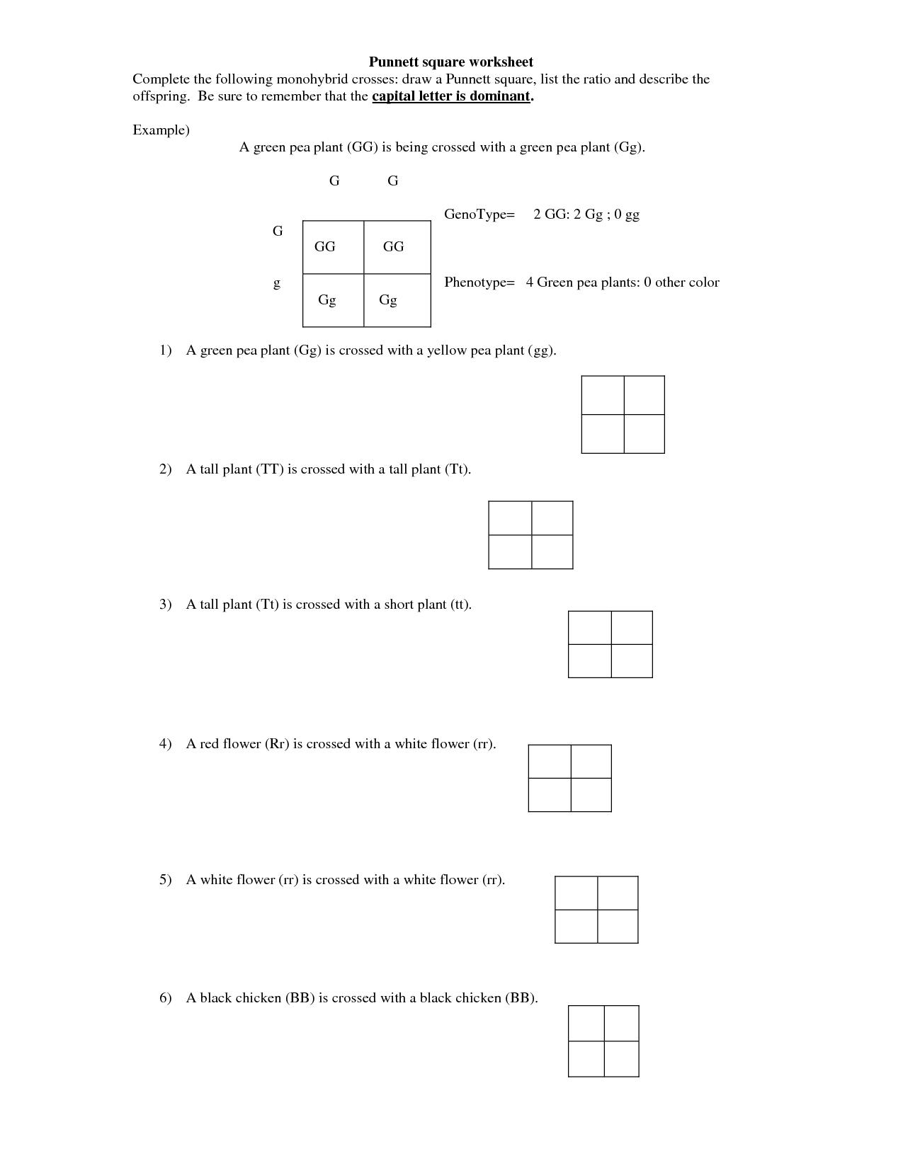 Worksheets On Monohybrid Cross