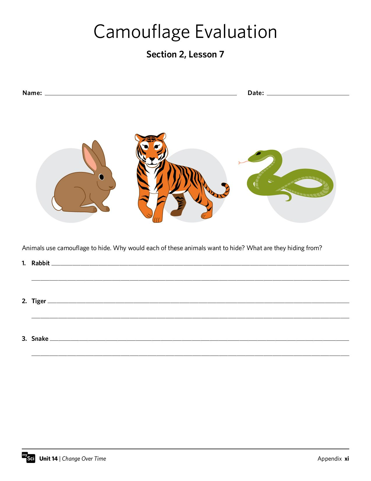 Camouflage Worksheet Free Mysci Handout Animals Adaptations Science Teaching