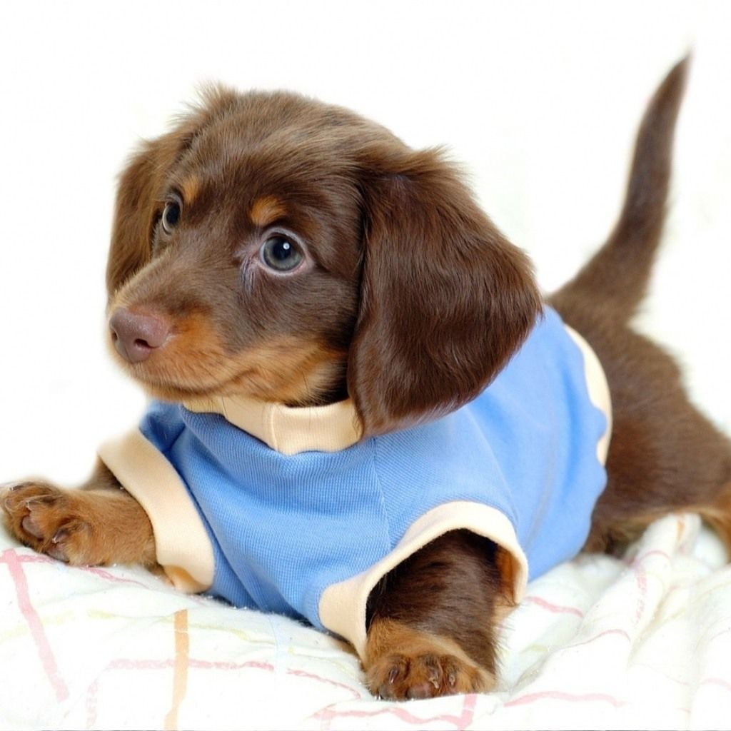 puppies wearing clothes make me smileeee. Love Adorable