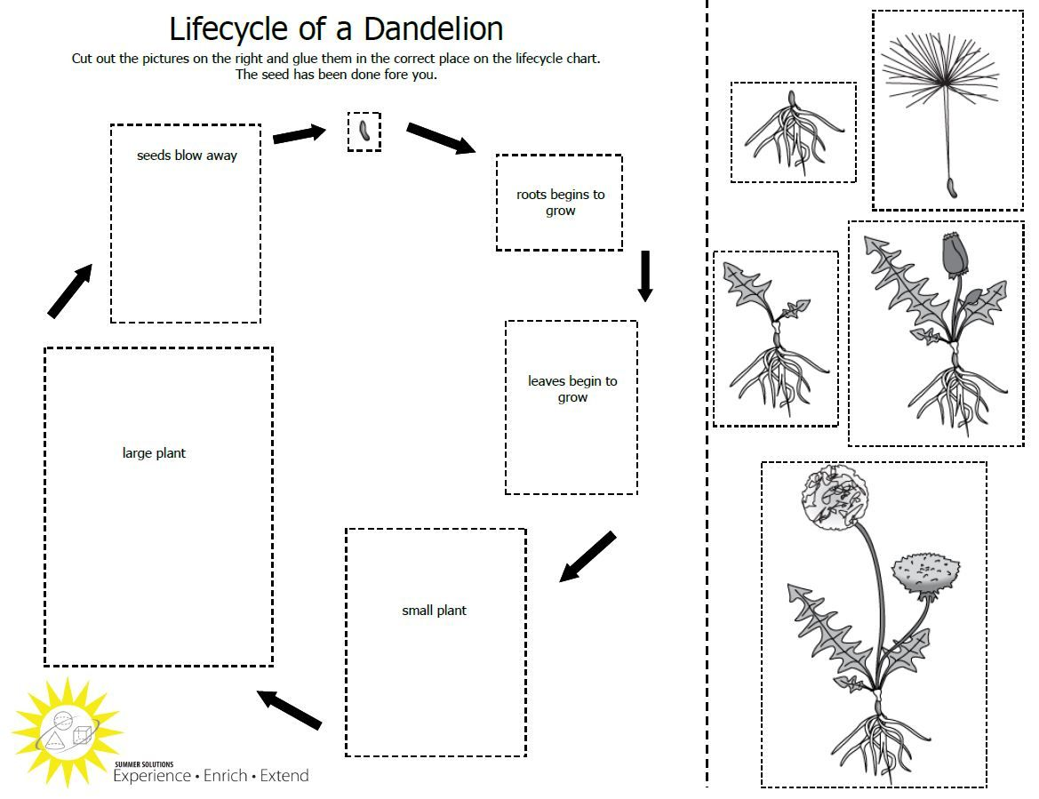 Teach Students About The Plant Lifecycle With This Free