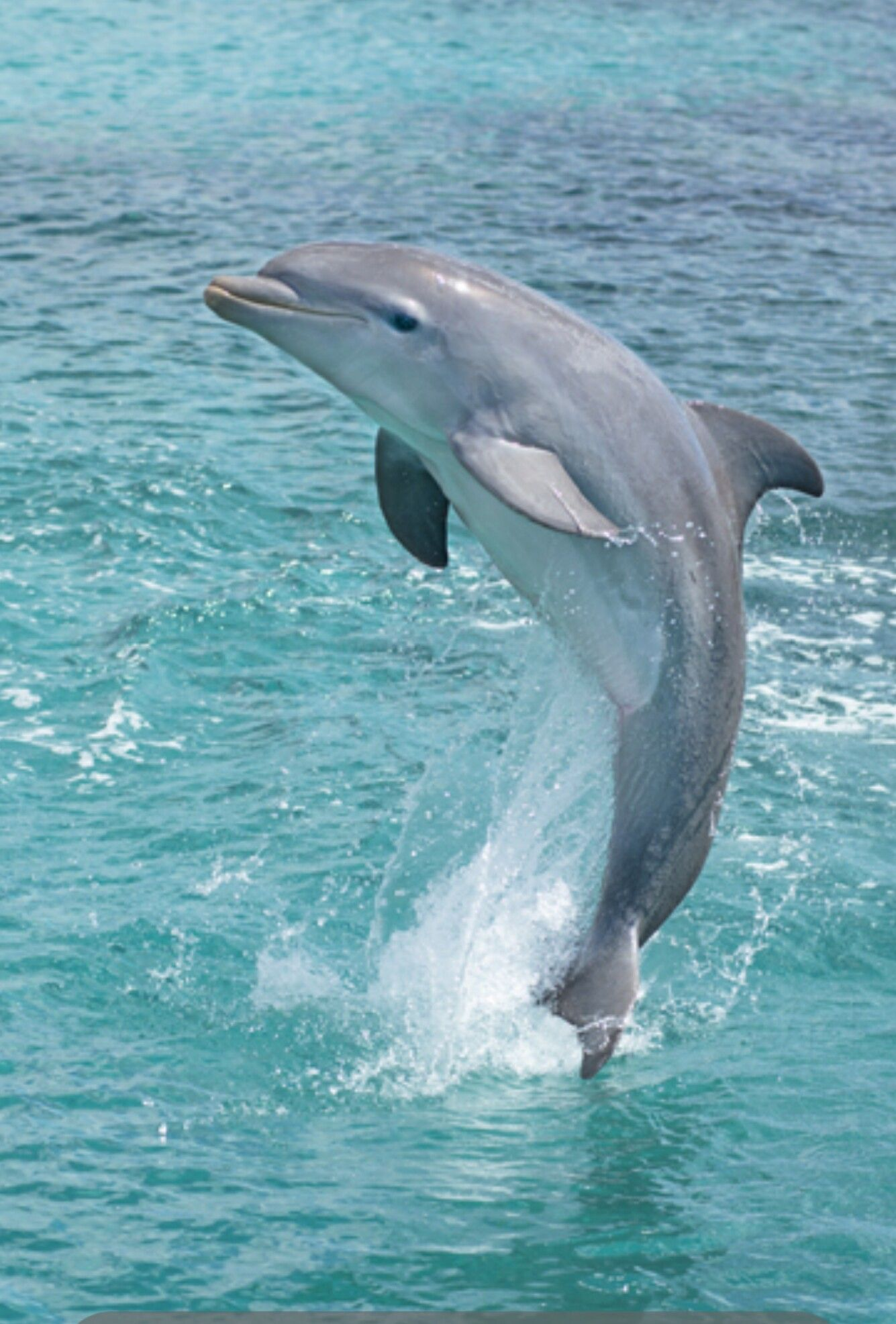 Beauty in the wild *Dolphins Pinterest Animal, Ocean