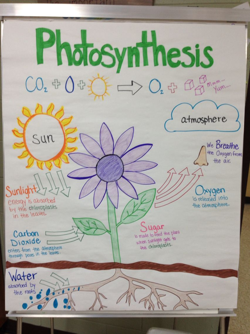 Photosynthesis anchor chart by Miss Lintz Science