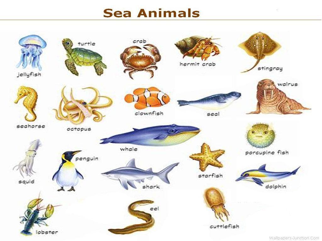 Sea Animals Image 2 768