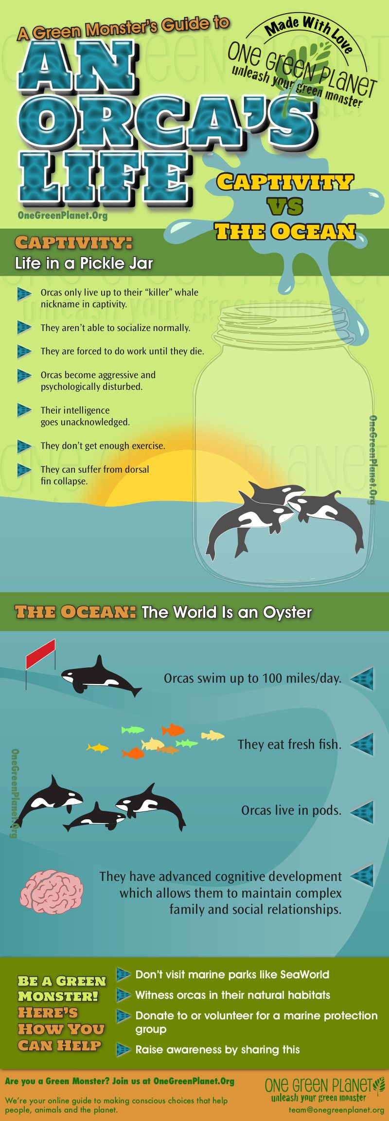 An Orca's Life in Captivity vs. the Ocean [INFOGRAPHIC