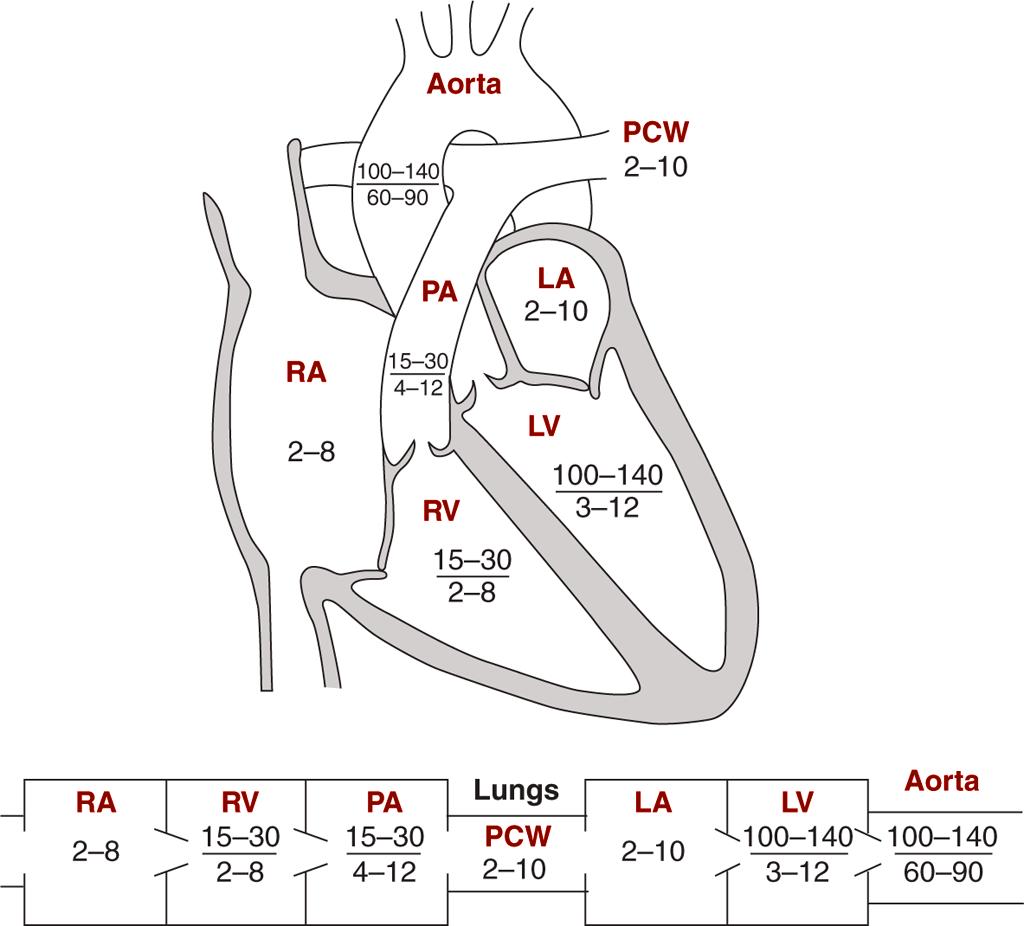 Image Diagrams Indicating Normal Pressures In The Cardiac