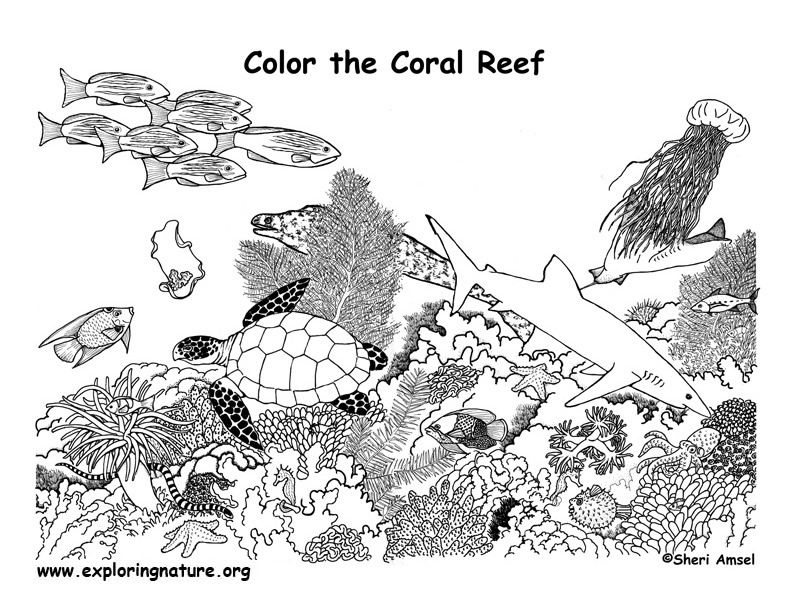 1000 images about coral reef coloring pages on pinterest coral
