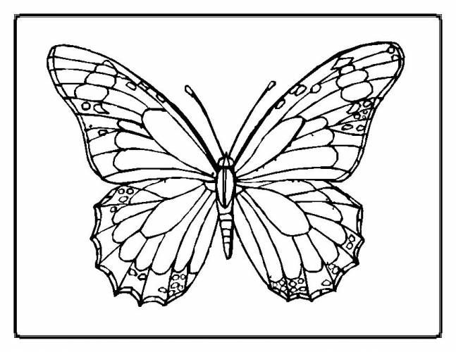 1000 images about coloring pages on pinterest adult coloring