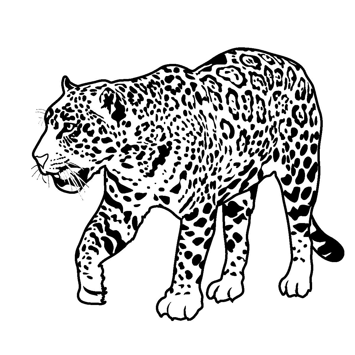 Printable Jaguar Coloring Pages
