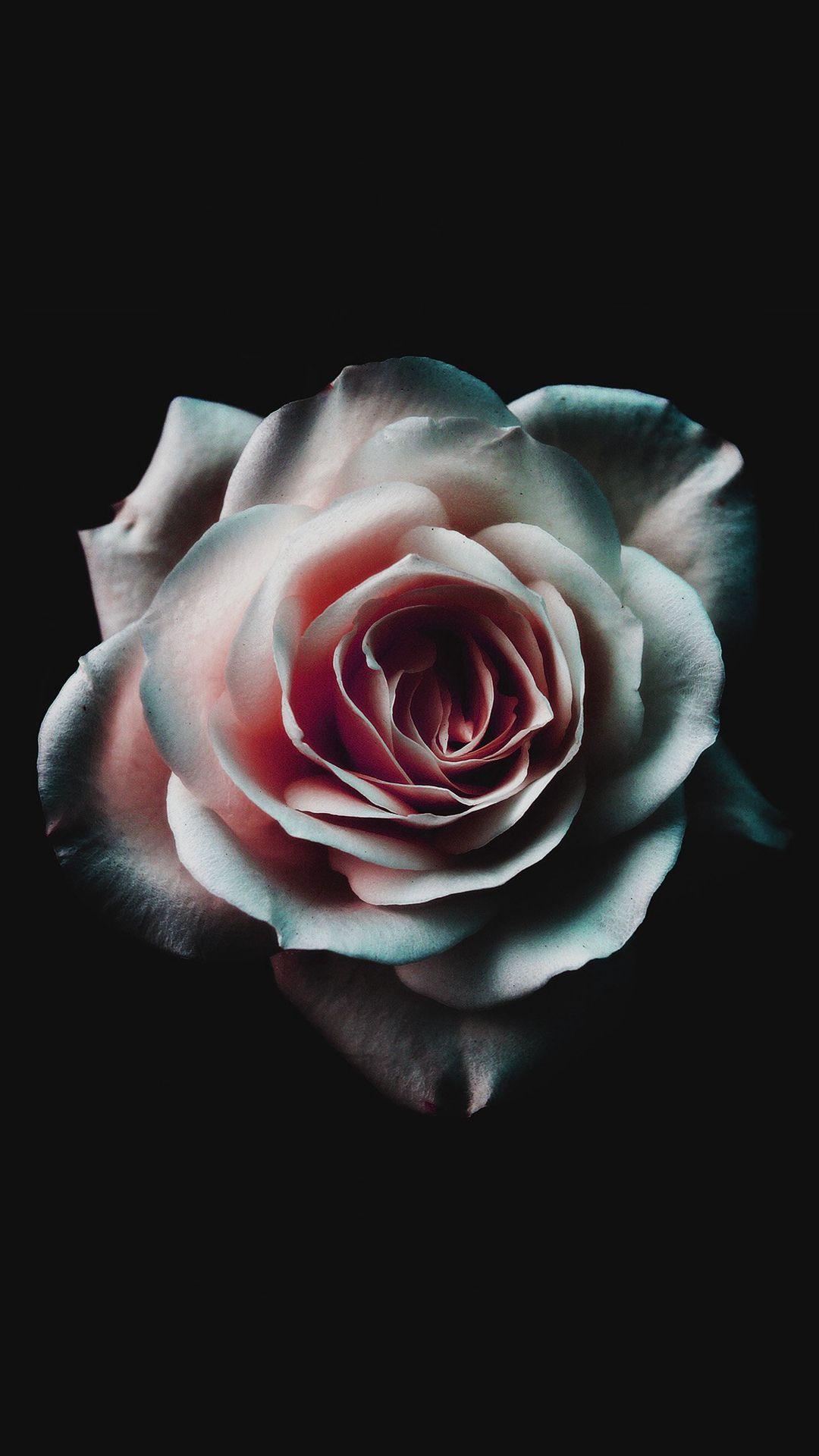 Flower White Dark Red Green Minimal Nature iPhone 6