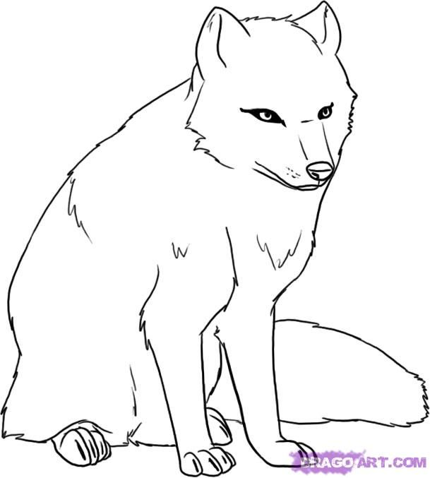 arctic fox foxes and how to draw on pinterest