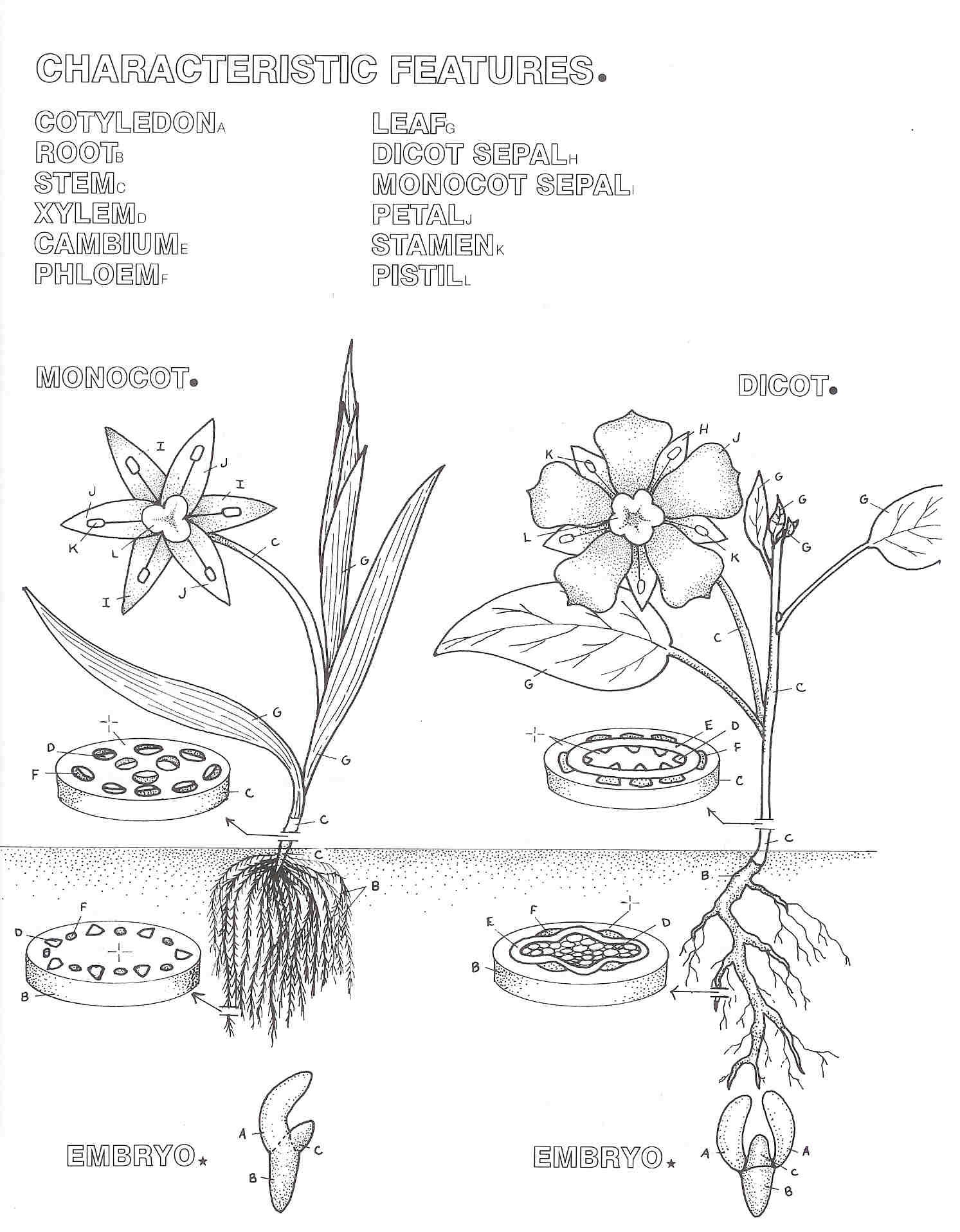 Free Coloring Pages Download Flowering Plants Of The World By V Science Nature Inspired Art