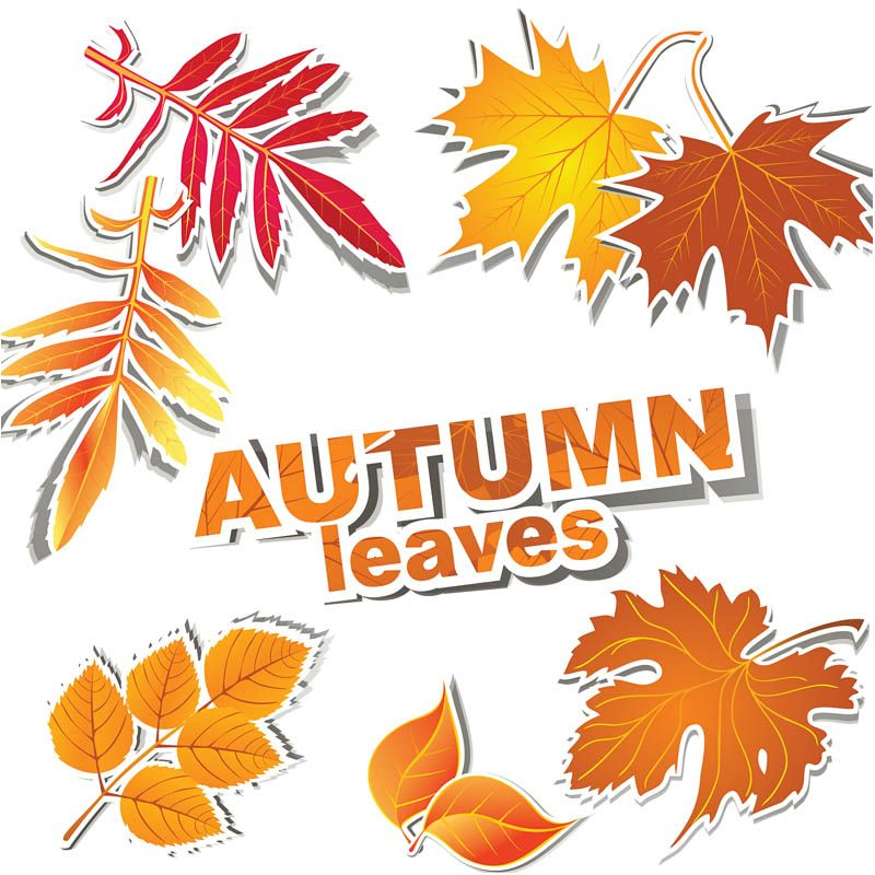 Autumn Leaves Clip Art Banners fall leaves templates in