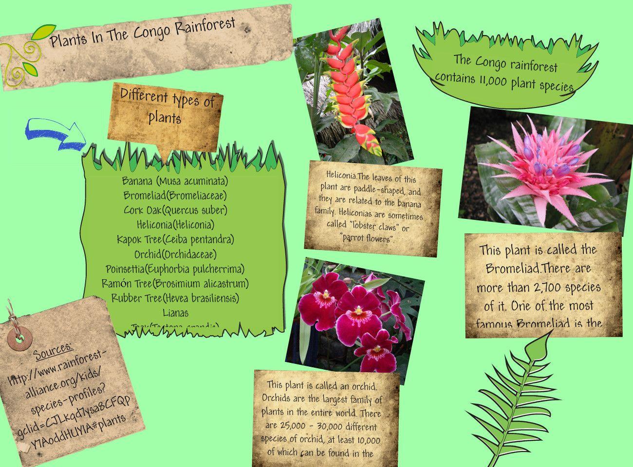 congo rainforest plants Google Search Central Africa