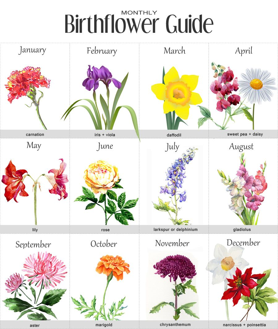 birth month flowers … Pinteres…