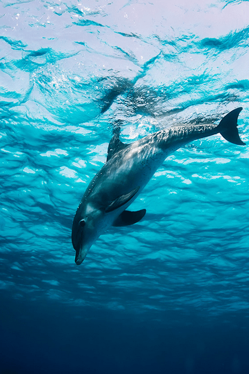 Animals Everywhere! / the beauty of dolphins / marine life