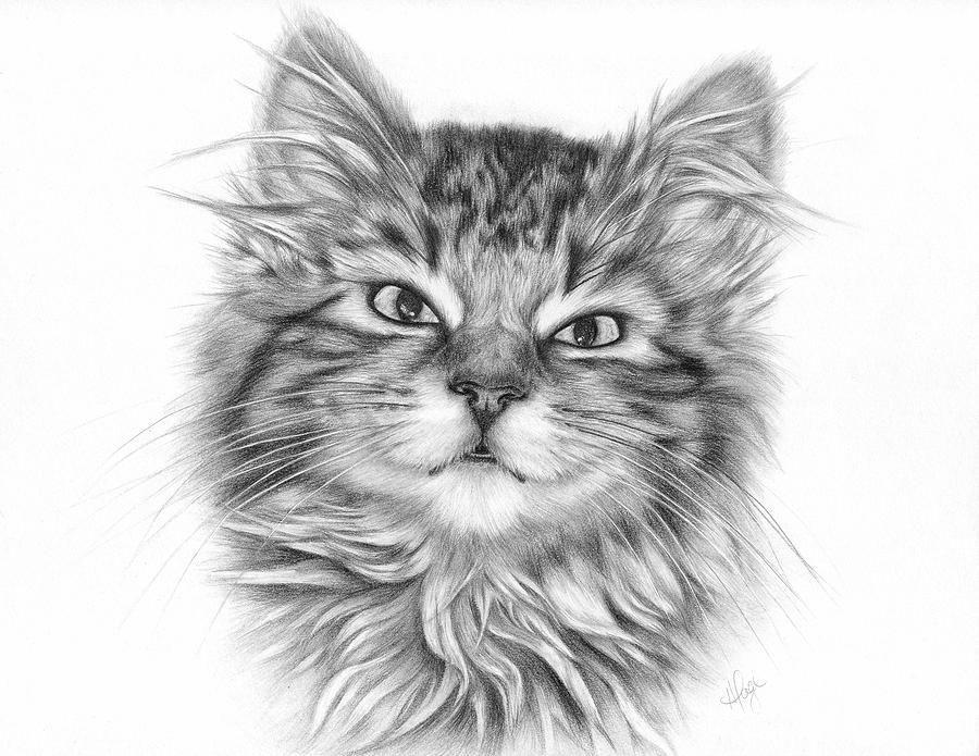 Seven Tabby Kitten Drawing Fine Art Print by Heather