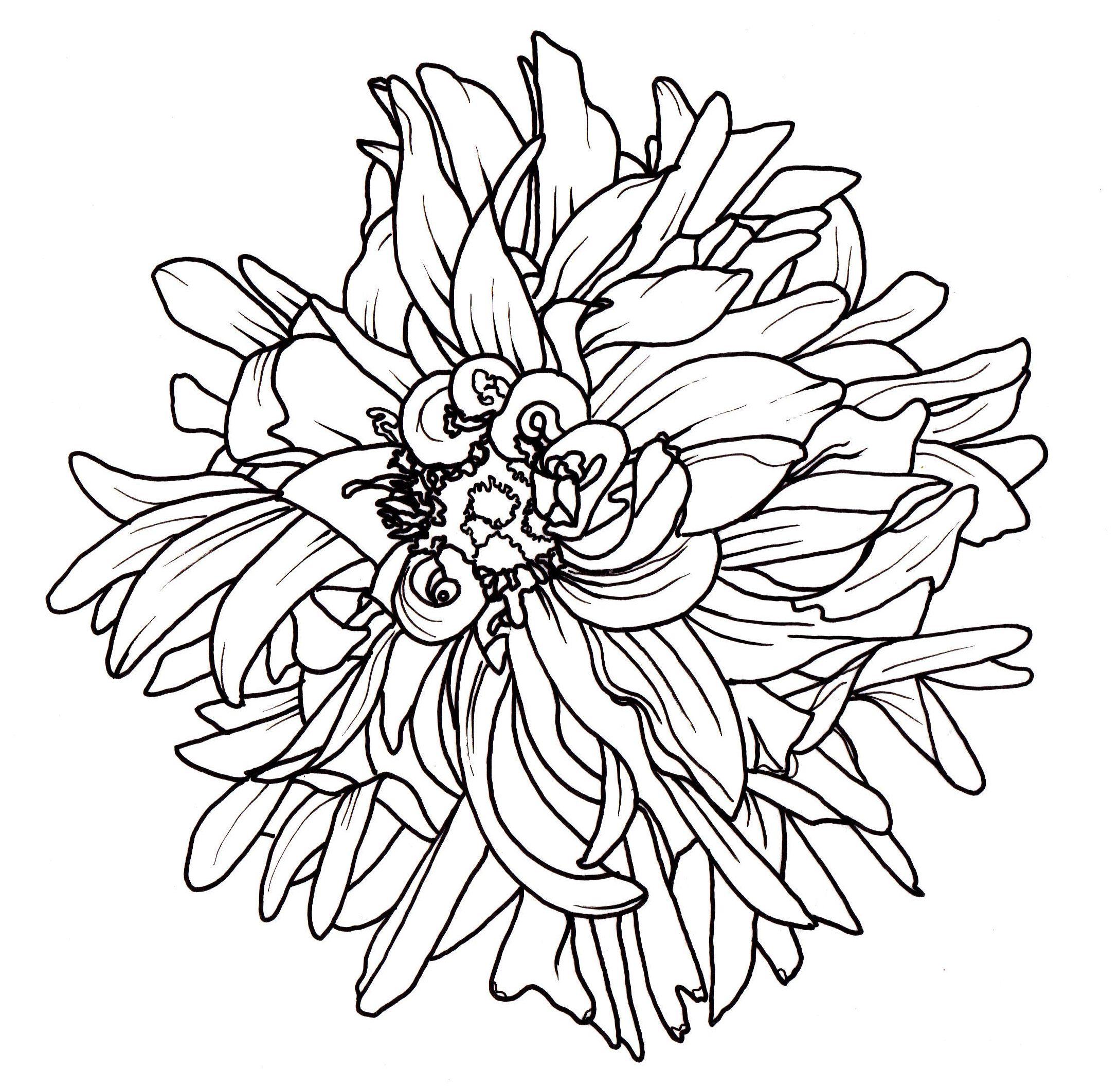 line drawing flowers dahlia Drawings Pinterest