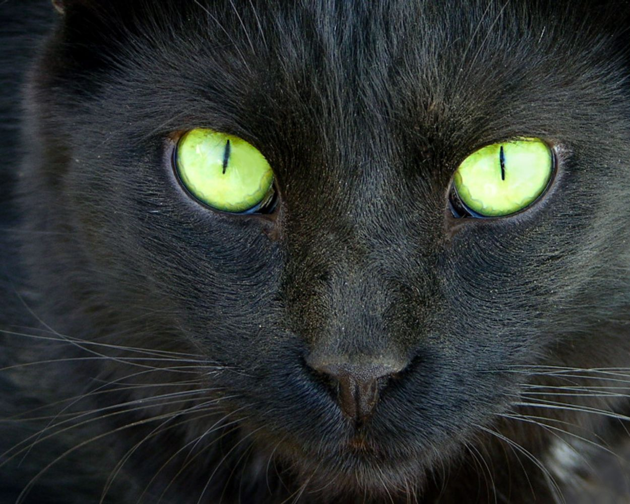 images of black cats with green eyes Boo Black Cat