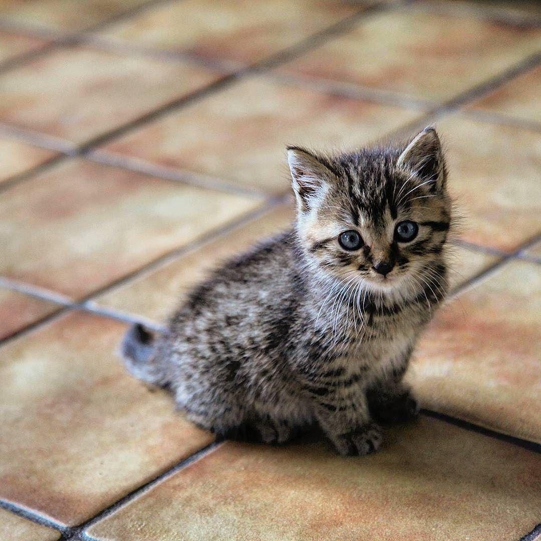 Angelic benheinephotography kitten cute sweet cat