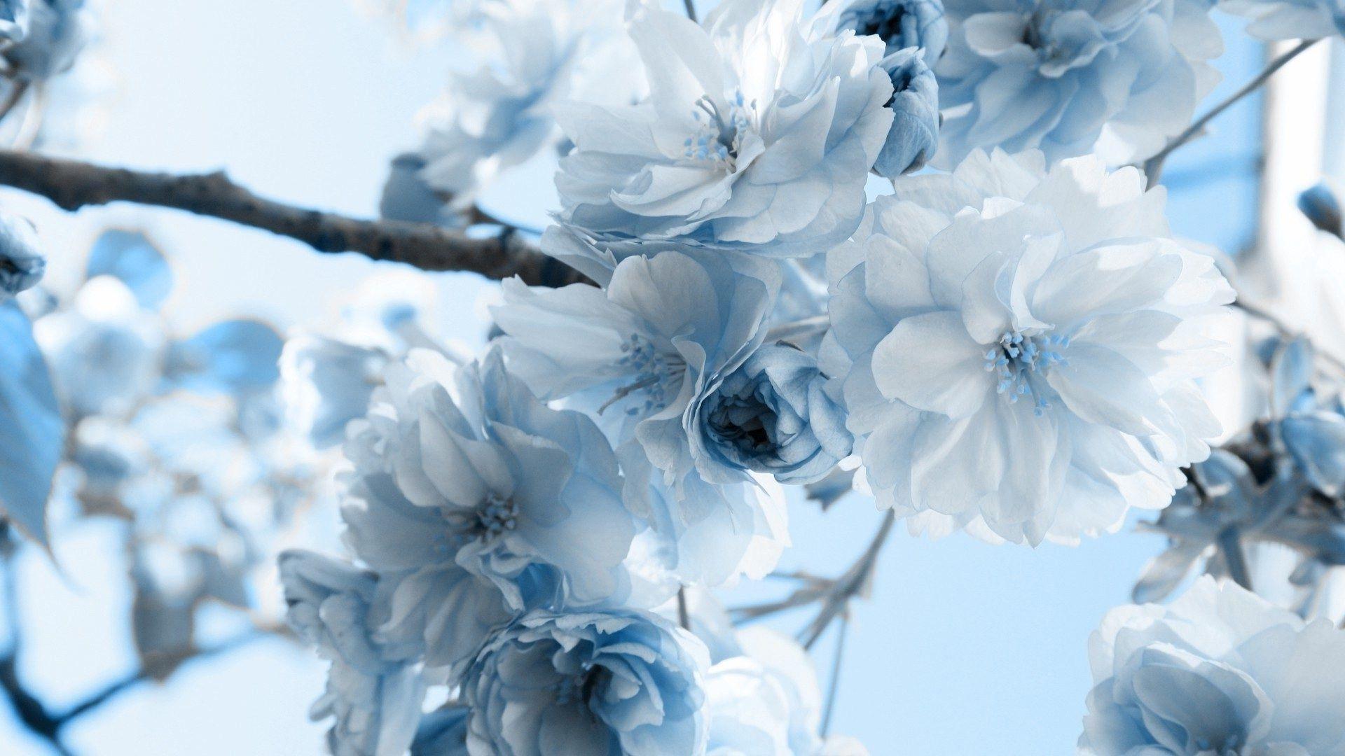 blue flowers Blue Pinterest Blue flowers, Blue