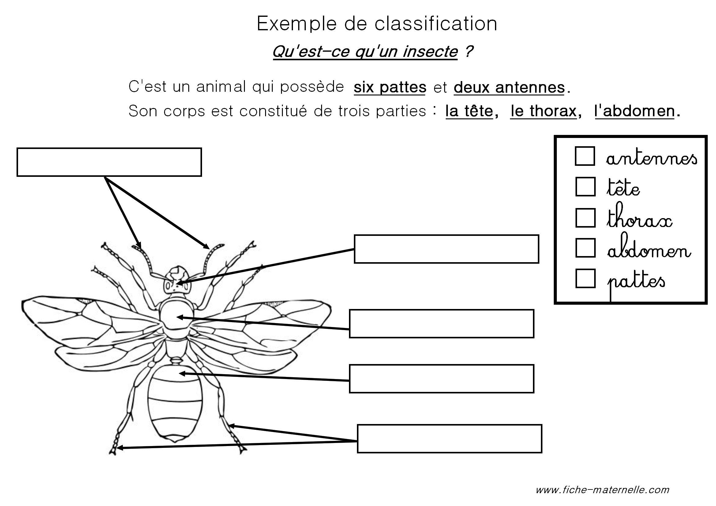 Classification Des Animaux En Maternelle Et Cp