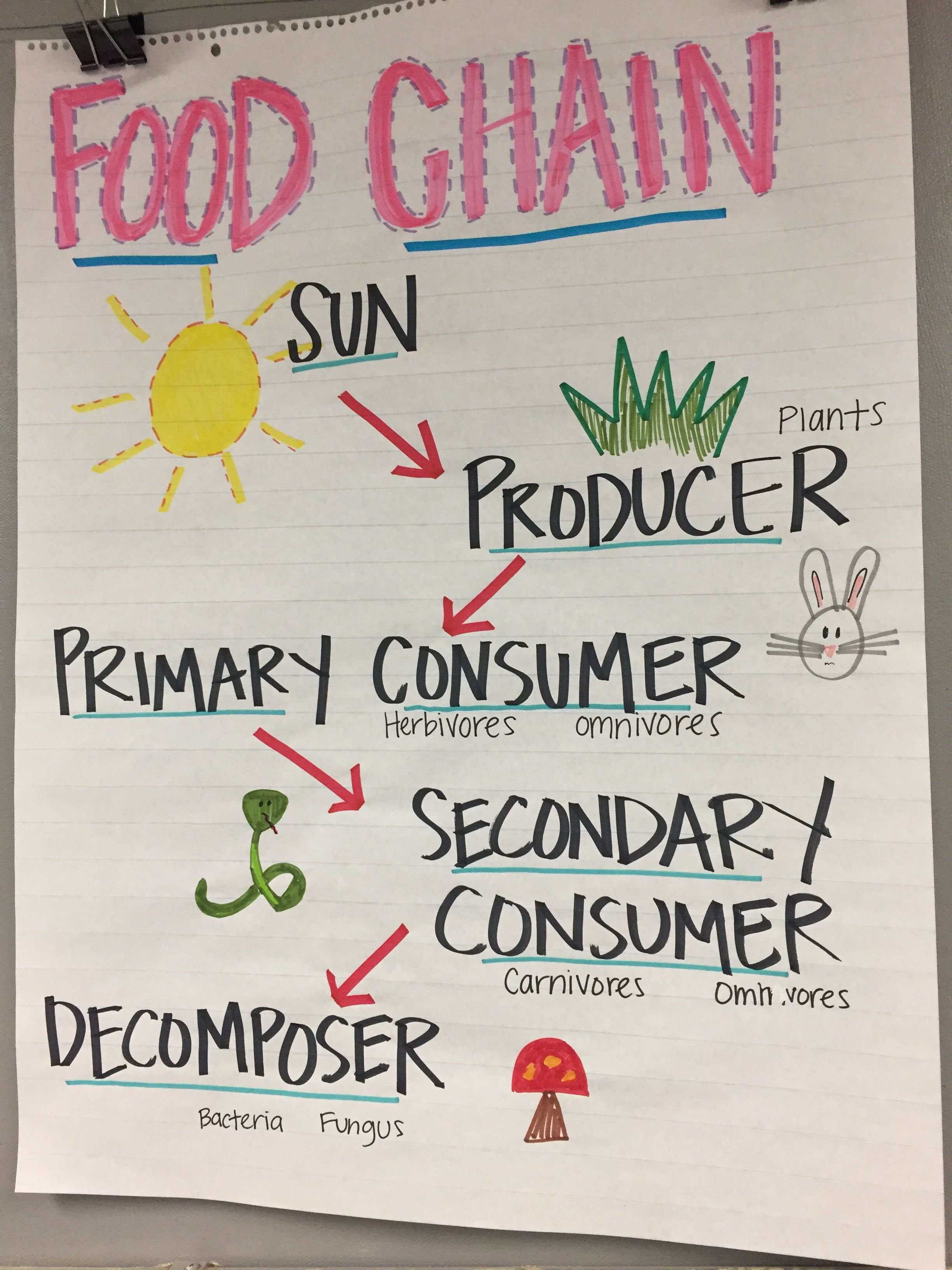 Food Chain Anchor Chart