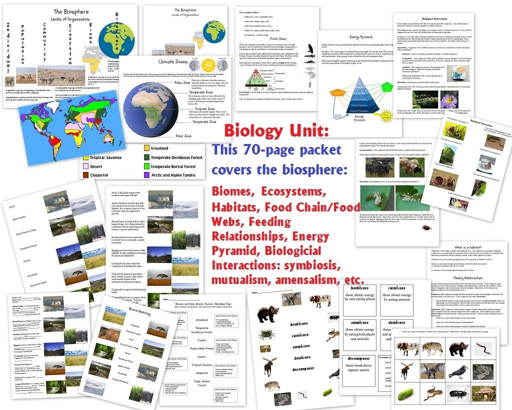Biology Unit On The Biosphere Biomes Ecosystems Habitats Feeding Relationships Biological