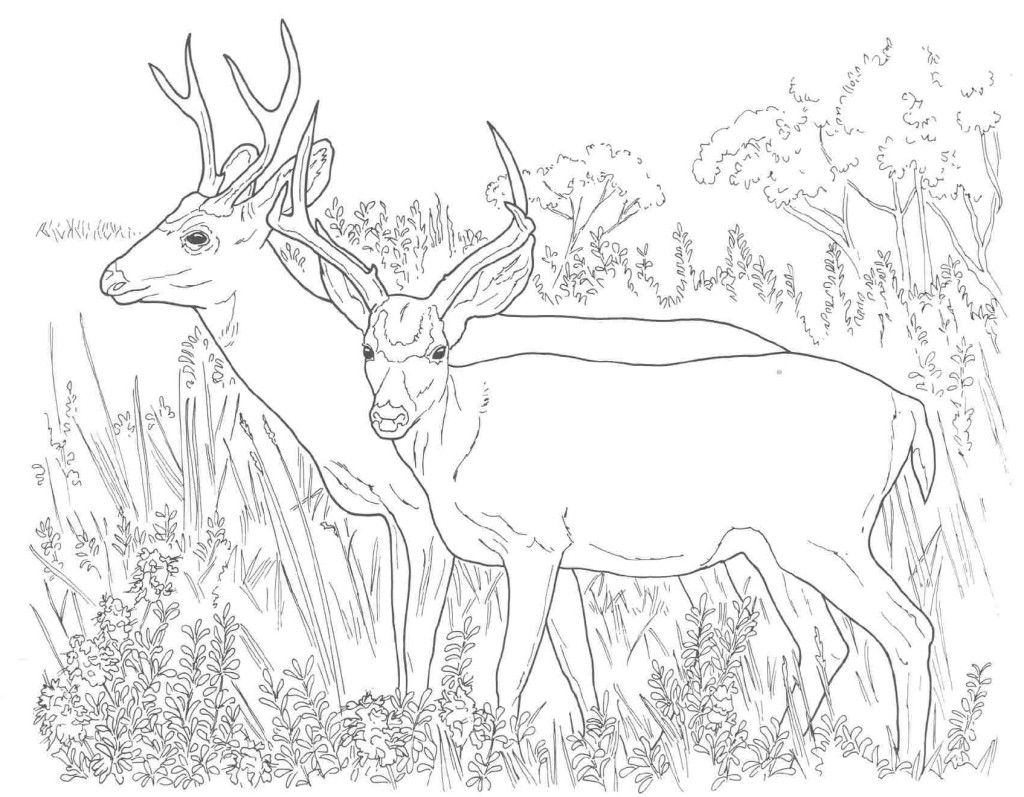 Deer Coloring Pages Online Coloring Pages For Adults Pinterest
