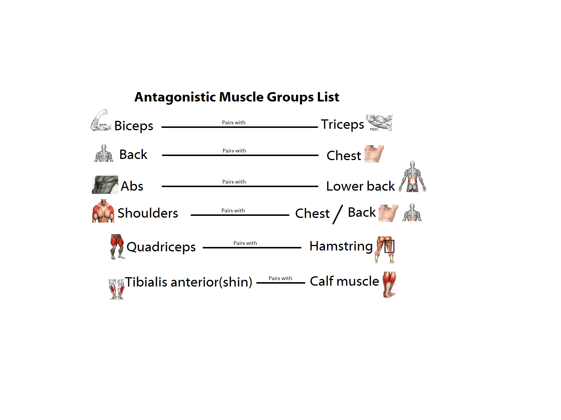 Agonist And Antagonist Muscles List