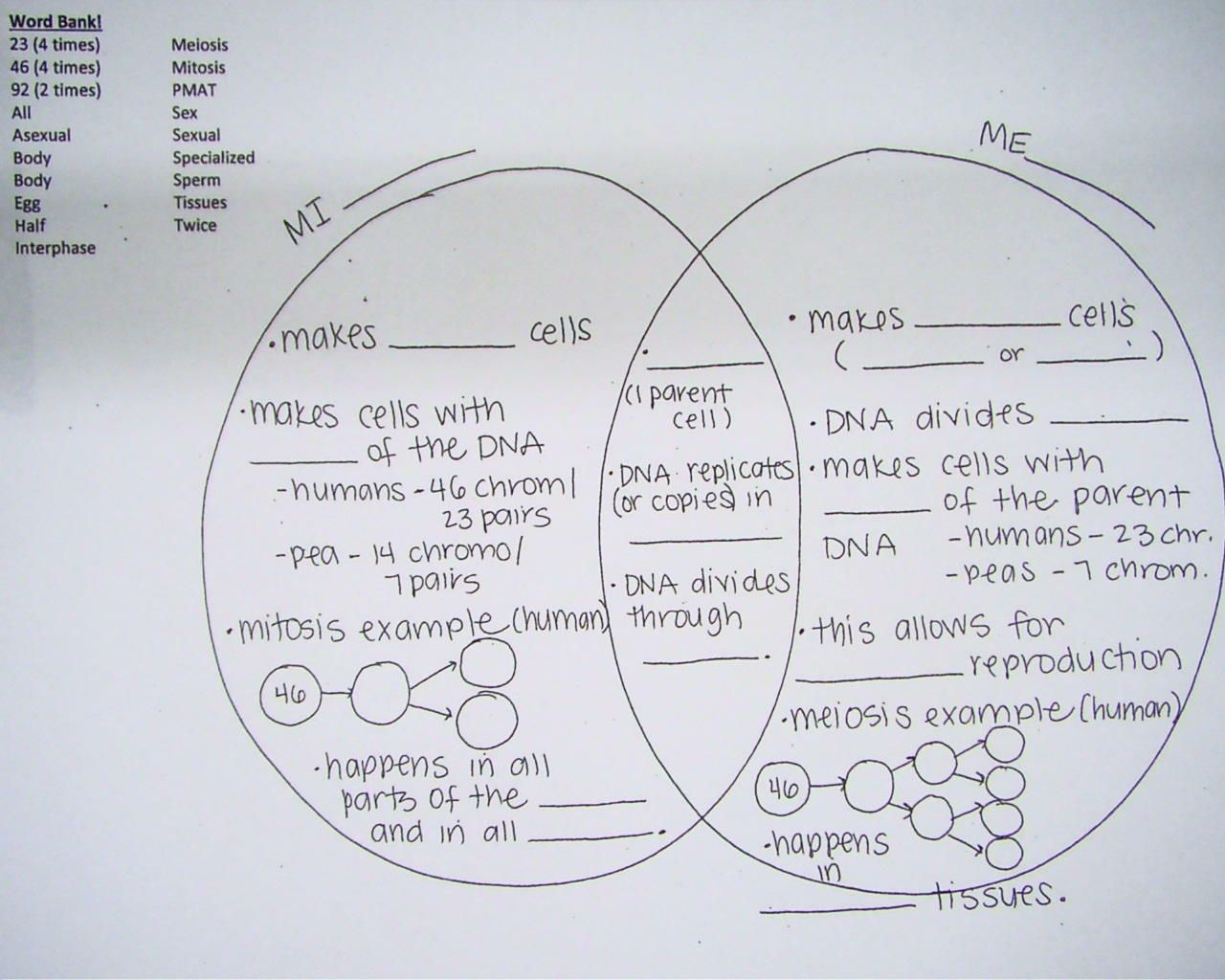 mitosis and meiosis Google Search School Biology