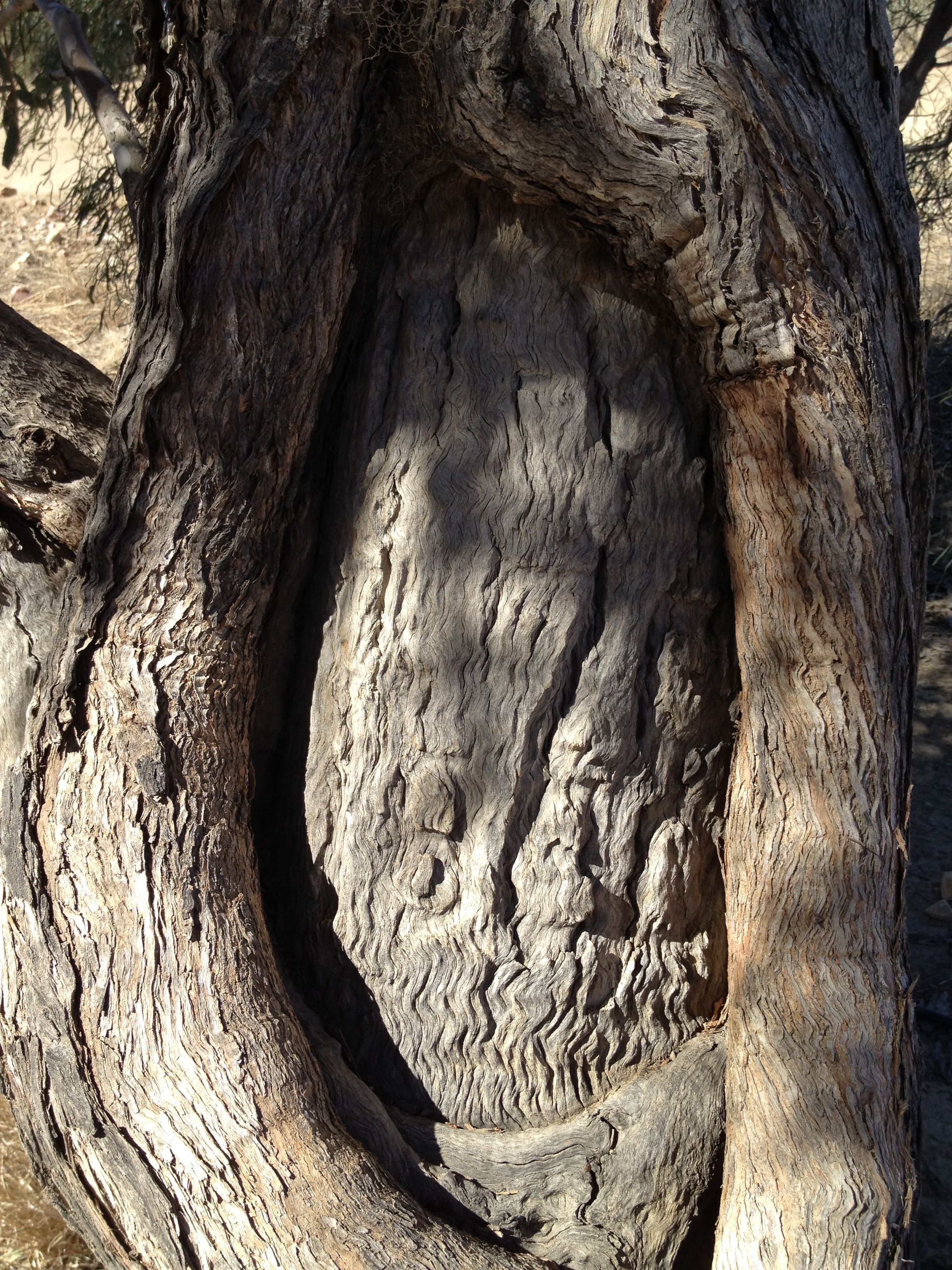 Burke & Wills initials in the tree Brisbane to
