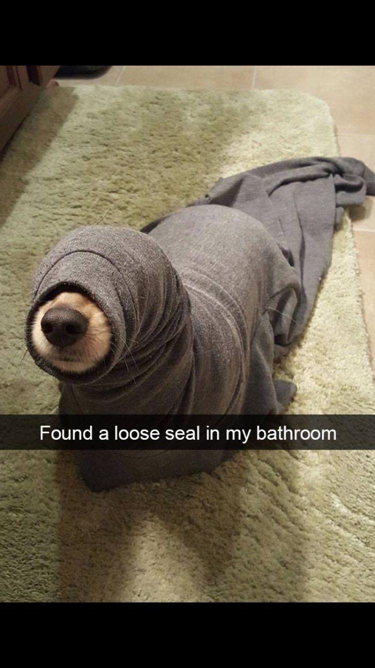 Funny dog memes XD Pinterest Funny dog memes, Dog