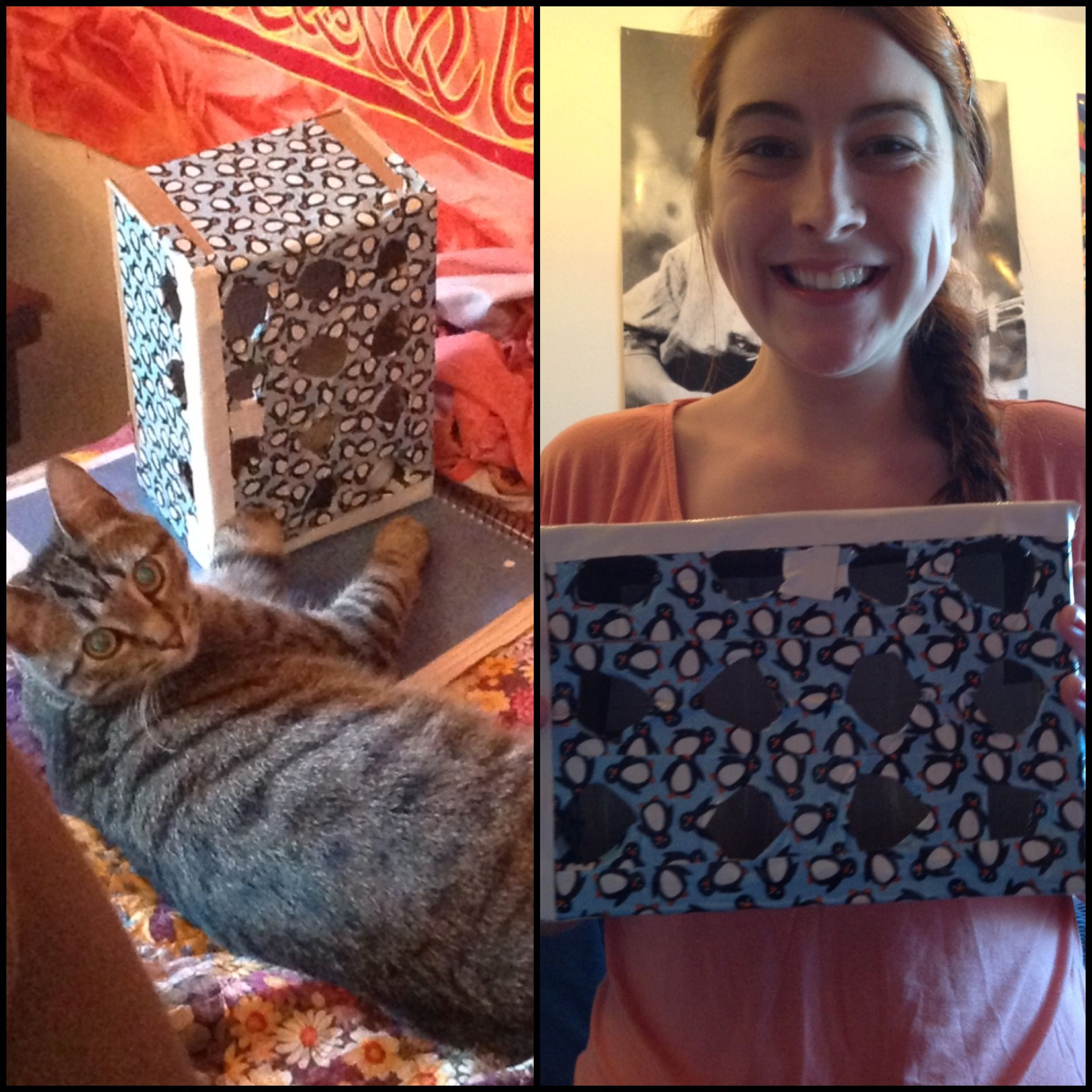 DIY Cat toy! Cut holes in a shoe box and put a ping pong
