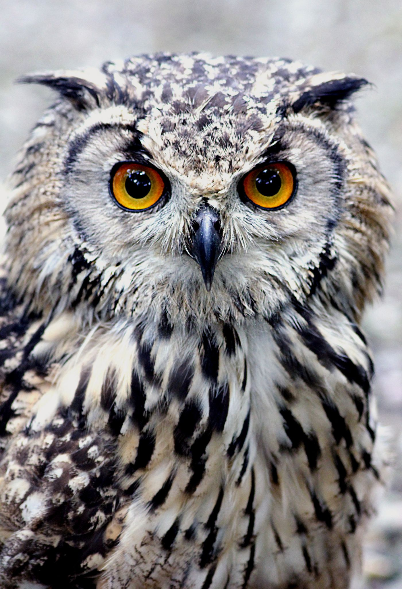 An owl is a nocturnal animal that you will be able to