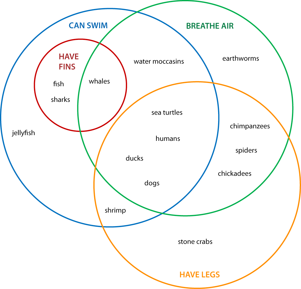 Cladogram And Venn Diagram Worksheet