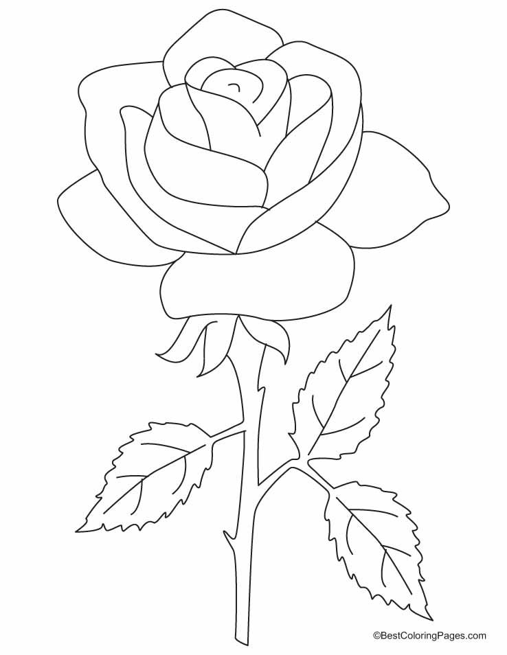 beautiful roses coloring and coloring pages on pinterest